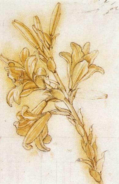 Leonardo da Vinci Lily detail1